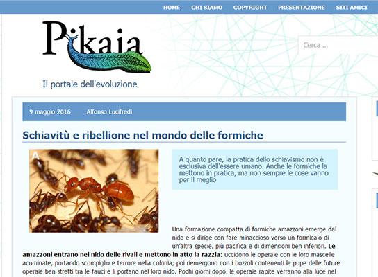 """""""Schiavitù e ribellione nel mondo delle formiche"""", Pikaia"""